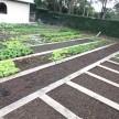 Horta orgânica do Colégio