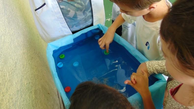 1ºano-salvando_os_bebês_tartarugas (7)