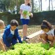 Momento da colheita de alfaces
